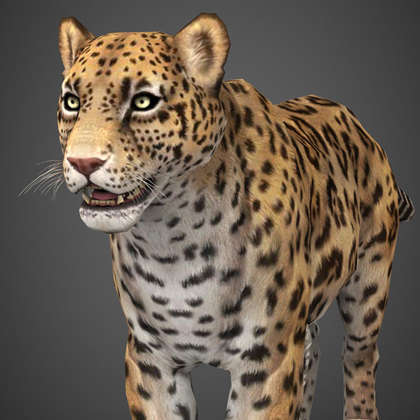 Realistic Game Ready 3D Cheetah - 3DOcean Item for Sale