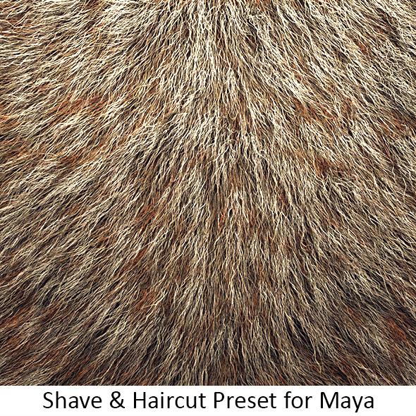 Shave Animal Fur4 - 3DOcean Item for Sale