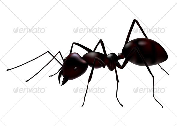 GraphicRiver vector ant 51416