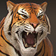 Download Animated Tiger - Low Poly from 3DOcean