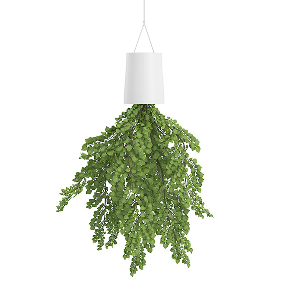 Plant in Inversed Hanging Planter - 3DOcean Item for Sale