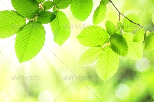PhotoDune nature 1291155