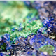 Malachite and Azurite Crystals