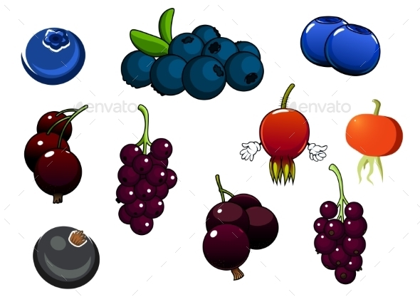 Fresh Blueberries, Blackcurrant And Briars Fruits