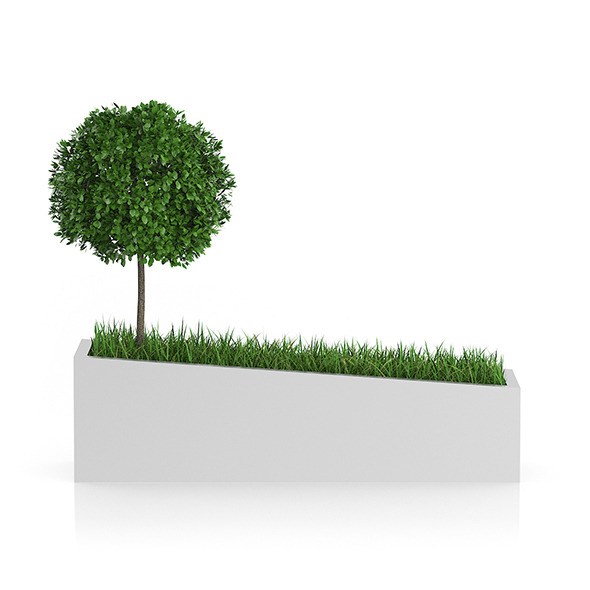 Tree an Grass in Rectangular Planter - 3DOcean Item for Sale
