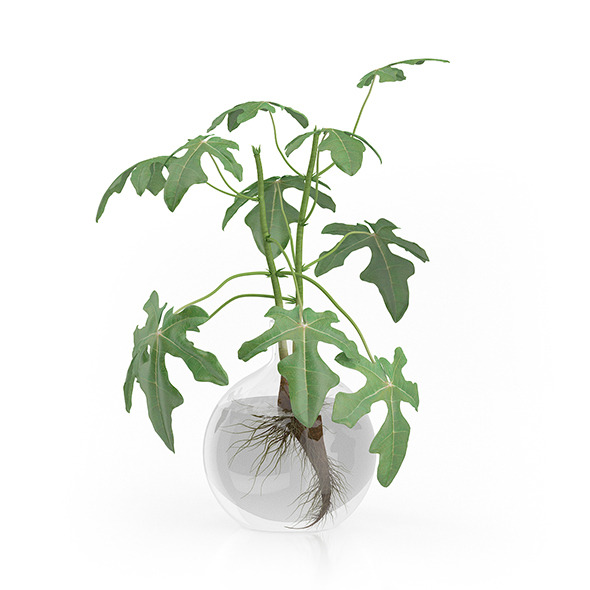 Fig Plant in Glass Vase - 3DOcean Item for Sale