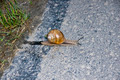 Snail cross the street - PhotoDune Item for Sale
