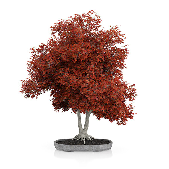 3DOcean Red Bonsai Tree 12948912
