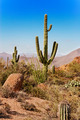 Tonto National Forest cactus - PhotoDune Item for Sale