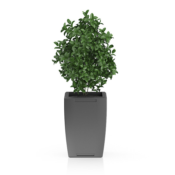 Plant in Rectangular Pot - 3DOcean Item for Sale