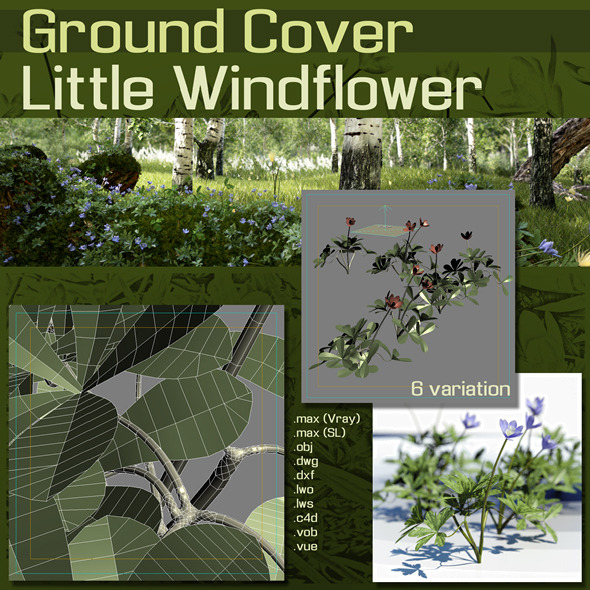 3DOcean Ground Cover Windflower 1301962