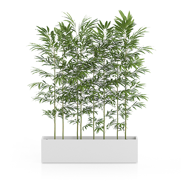 Bamboos in Large Rectangular Pot - 3DOcean Item for Sale