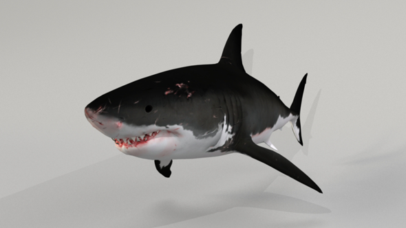 Great White Shark - 3DOcean Item for Sale