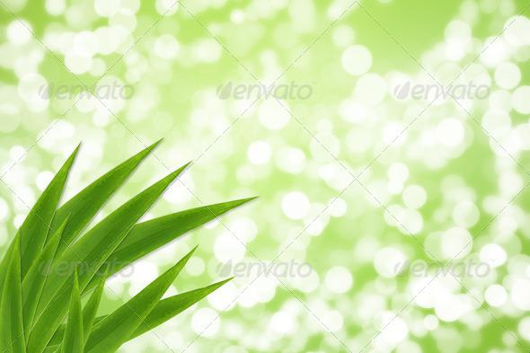 PhotoDune Spring 1309711