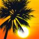 Palm Brushes