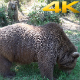 Giant Bear in Natural Environment Forest (3 Clips)