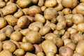 Fresh Organic Young Raw Brown Potatoes On Local Agricultural Veg