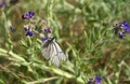 Beautiful Butterfly in Vegetation - PhotoDune Item for Sale