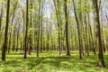Green deciduous forest on a sunny day