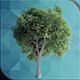 ED Tree Model 001
