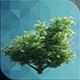ED Tree Model 002