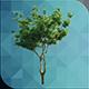 ED Tree Model 003