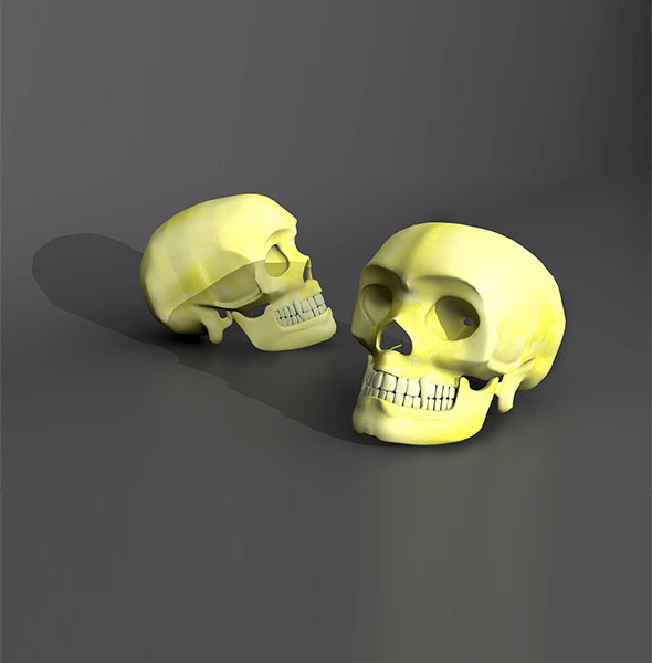 Human Skull Model - 3DOcean Item for Sale