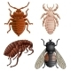 Set Of Icons With Pests