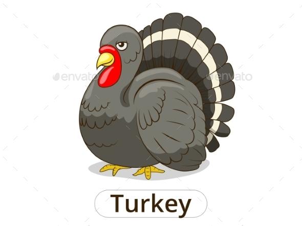 Turkey Animal Cartoon