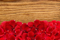 beautiful red rose petals over wood texture close-up