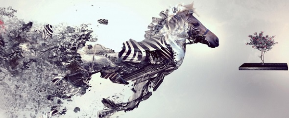Foto-zebra-9819