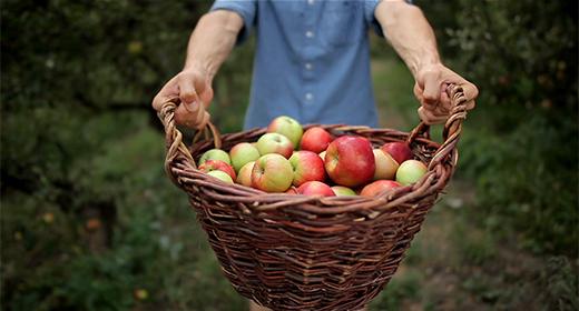 Handsome man in apple garden