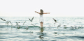 beautiful woman and seaguls on the beach