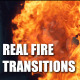 Organic Fire Transitions (Pack of 5)
