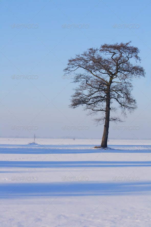 tree in the winter - Stock Photo - Images