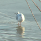 Bird in water - VideoHive Item for Sale