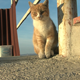 Cat on a rooftop - VideoHive Item for Sale