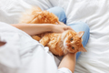Ginger cat lies on woman's hands. The fluffy pet comfortably settled to sleep or to play.