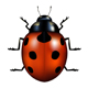 ladybug - GraphicRiver Item for Sale