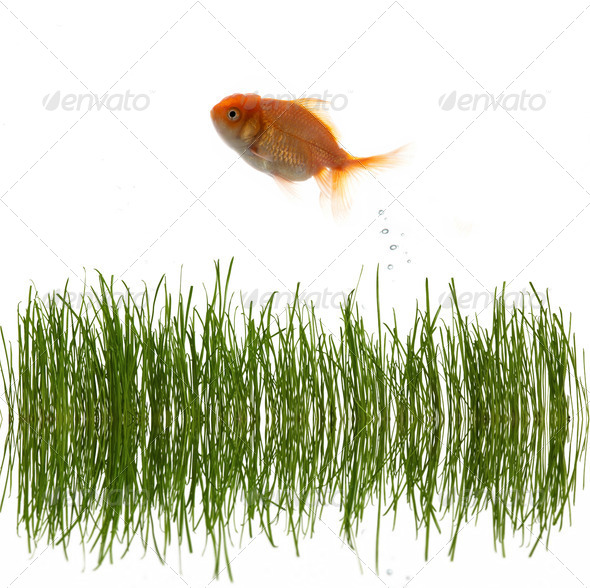 Grass and fish - Stock Photo - Images
