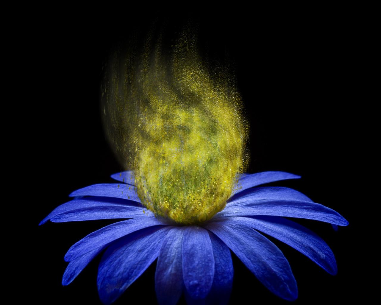 Výsledek obrázku pro květina