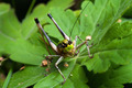 bush-cricket - PhotoDune Item for Sale