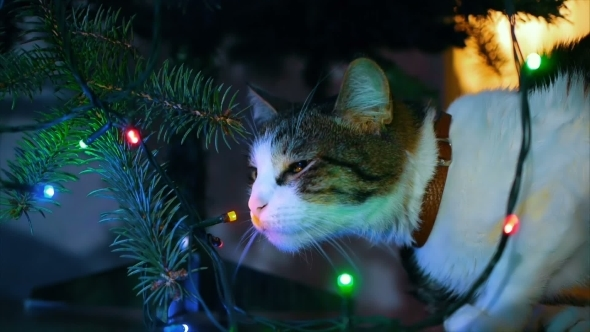 Cute Cat Playing With Ornament On Christmas Tree