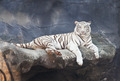 White tiger on a rock in zoo - PhotoDune Item for Sale