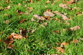 grass texture with leaves in autumn - PhotoDune Item for Sale