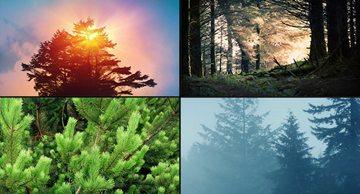 Forests, Plants & Trees