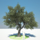 Download Olive Tree from 3DOcean