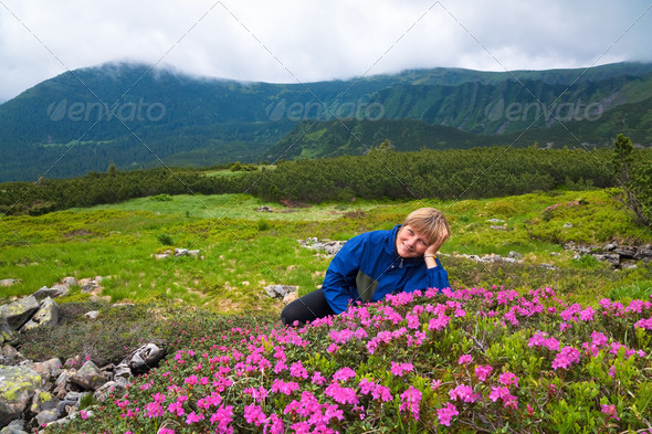 Mountain rhododendron blossoming - Stock Photo - Images