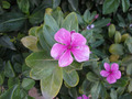 Flower - PhotoDune Item for Sale