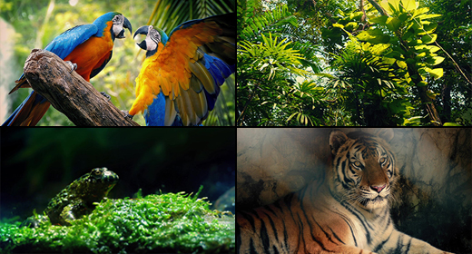 Jungle Animals & Plants